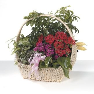 Flower Basket Garden